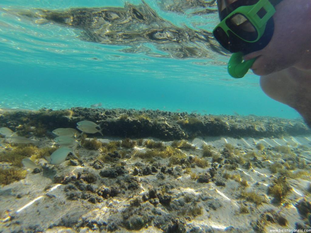 Cenário do mergulho (já na parte rasa de Platis Gialos)