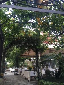 Limões sicilianos são até decorativos